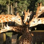 Taronga Western Plains Zoo (short 10mins drive) (296963532)