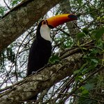 Toucan on grounds