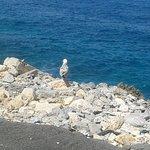 Ακρωτηρι ψαροταβερνα-ουζερι