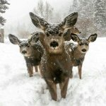 Some of our beautiful Whitetail Deer they like posing in our game camera's.