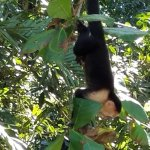 Zdjęcie La Posada Private Jungle Bungalows