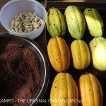 otra actividad ...hacemos chocolate con nuestro cacao