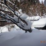 Photo de Hoshi Onsen Chojukan
