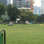 ゴルフ練習場内の黒山羊とボールを回収するカート
