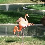 Lovely gardens and flamingos on the resort grounds.