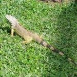 Local wildlife in the resort gardens.