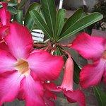 Wonderful flower makes nice view :)