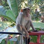 Φωτογραφία: Jungle Bird Homestay