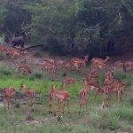 Photo of Tembe Elephant Park Accommodation