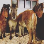 Hi there... :) Four foals in our cozy stable