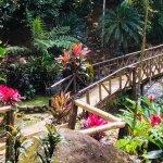 Foto de Chachagua Rainforest Eco Lodge