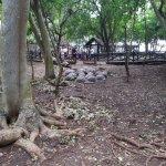 Photo of Prison Island - Changuu Private Island