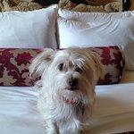 Foto de Hotel Encanto de Las Cruces