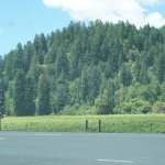 The view of the hills from River Road at Korbel Champagne Cellars in Guerneville.