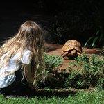 Resident tortoises