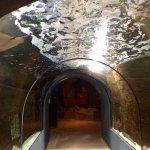 Acquario di Livorno Foto