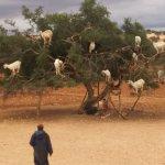 Photo de Angsana Riads Collection Morocco