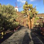 Foto de Jardín de Cactus