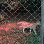 Zdjęcie Sao Paulo Zoo