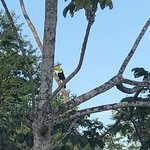 Check out the toucan on the third branch up on the right!