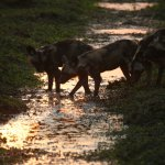 Foto de Vundu Camp