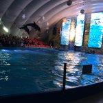 Photo of Odessa Delphinarium Nemo