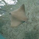 Pet a sting Ray :-)