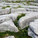 Lacy Limestone