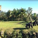 Gorila cortejando a la hembra