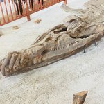 Kronosaurio