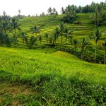 Jatiluwih Rice Fields - Green Staircases