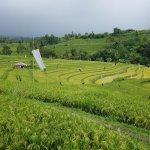 Jatiluwih Rice Fields - keeping the birds away