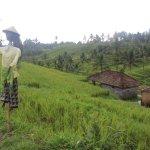 Jatiluwih Rice Fields - Scarecrow