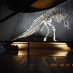 Photo of Museo di Storia Naturale
