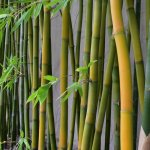 In back of the hotel stands a bamboo garden with mature bamboo trees.
