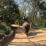 Photo of Wangpo Elephant Camp