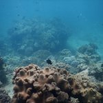 Photo of Ocean Free and Ocean Freedom