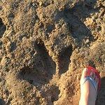 Dinosaur footsteps