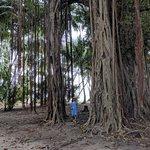 Local island tour, tree