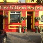 Yellow Heifer