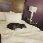 Foto de La Quinta Inn & Suites Columbia - Fort Meade