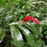 Beautiful tropical flowers at rain forest reserve