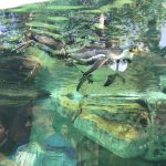La Aurora Zoo Foto