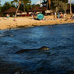 endangered Monk seal just appeared