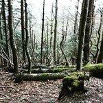 Photo of Parco Nazionale delle Foreste Casentinesi, Monte Falterona e Campigna