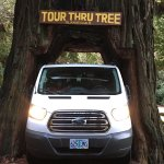 Amazing Trees in Redwood National Park-A rare picture