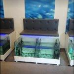 Φωτογραφία: Athens Doctor Fish - Foot Therapy & Day Spa