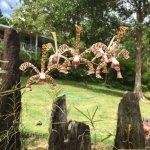 ภาพถ่ายของ Mamiku Gardens
