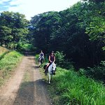 Discovery Horseback Tours照片