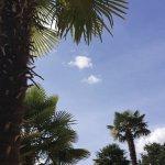 Palmier à l'entrée de la piscine